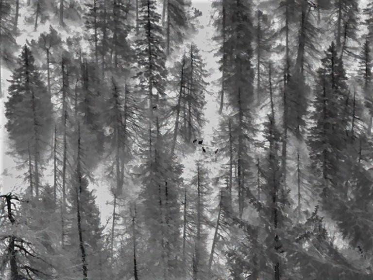 385 metri misurati col telemetro. Solo uno dei 5 camosci è visibile col binocolo. Gli altri li trova e li fotografa a ingrandimento 2.5x il Visore Termico Leica Calonox View, nascosti dai rami dei larici.