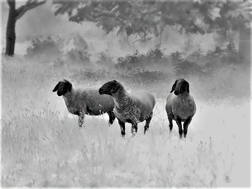 Grazie alla tecnologia Leica LIO(tm), l'imagine termica del Calonox mostra tra il classico bianco e nero di tutti i visori termici anche una ampia scala di grigi, che determinano la straordinaria definizione dei dettagli.